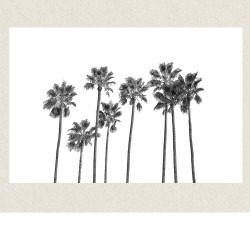 affiche black palm trees 2 50x70