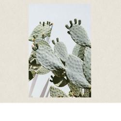 cactus opuntia 60x90