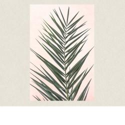 affiche palm leaf pink 60x90 D&D