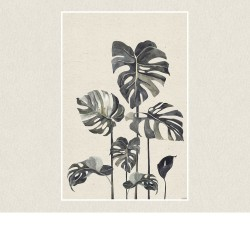 poster geant monstera