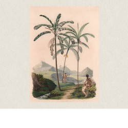 poster geant palmier ebouriffe