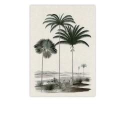 carte postale chou coco