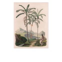 affiche palmier ebouriffe